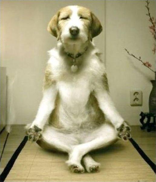 [Imagen: dog-humor-funny-Yoga-Master.jpg]