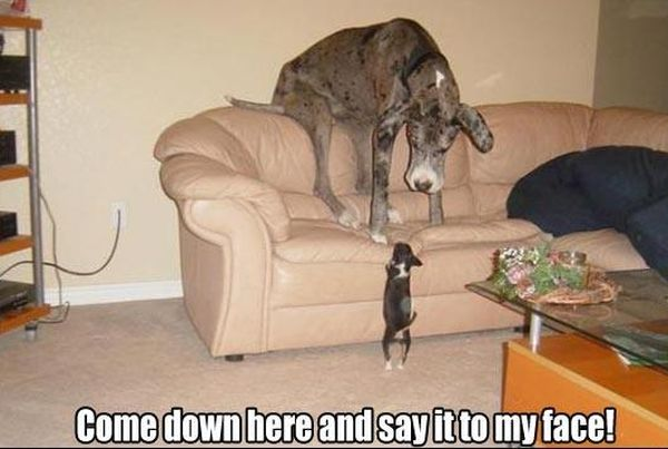 Come Down Here - Dog humor