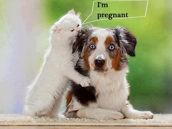 Darling, you know what? - Dog humor
