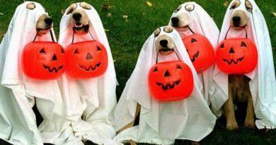 Funny Halloween Dog Costumes - Dog Humor