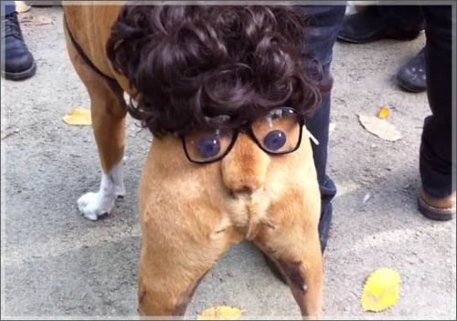 Funny Halloween Dog Costumes - Dog Humor : funny dog pictures in costumes  - Germanpascual.Com