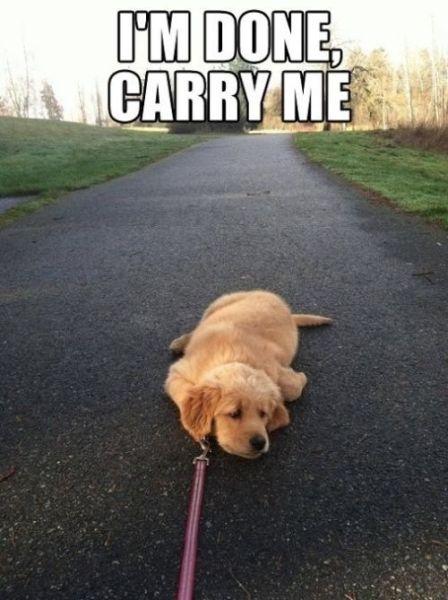 I'm Done! - Dog humor