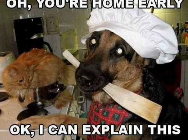 Meanwhile In The Kitchen - Dog humor