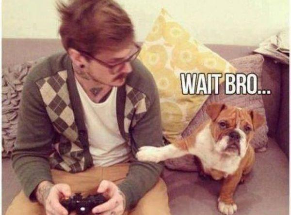 Wait Bro - Dog humor