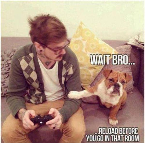 Wait Bro... - Dog humor