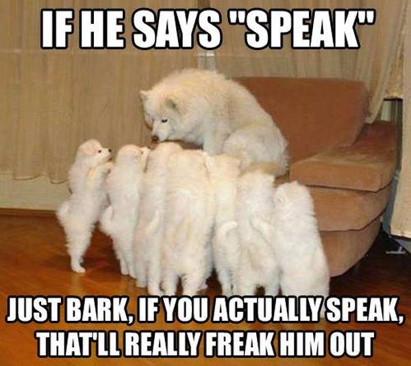 Just Bark - Dog Humor