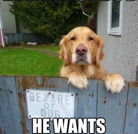 Beware of Dog - Dog humor