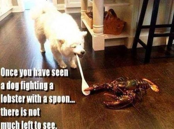 Epic Fight - Dog humor