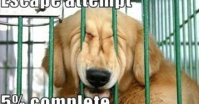 Escape Attempt - Dog humor