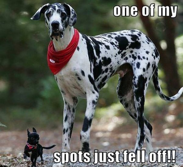 I Lost a Spot - Dog humor