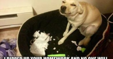I Ripped Up Your Homework - Dog humor