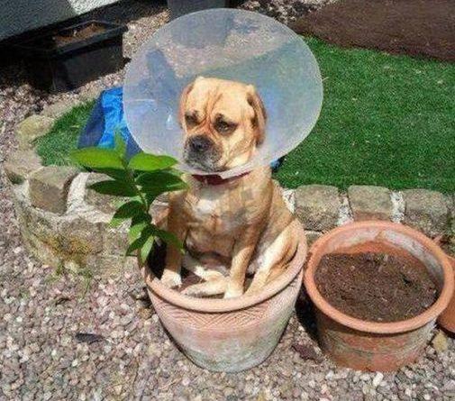I'm a Flower - Dog humor