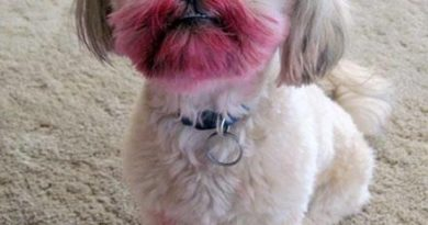 What Lipstick? - Dog humor