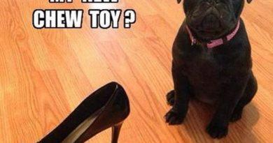 My New Chew Toy? - Dog humor