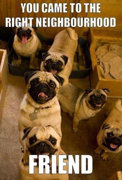 The Right Neighborhood - Dog humor
