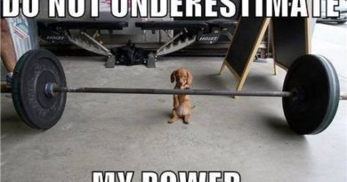 Puppy Power - Dog humor