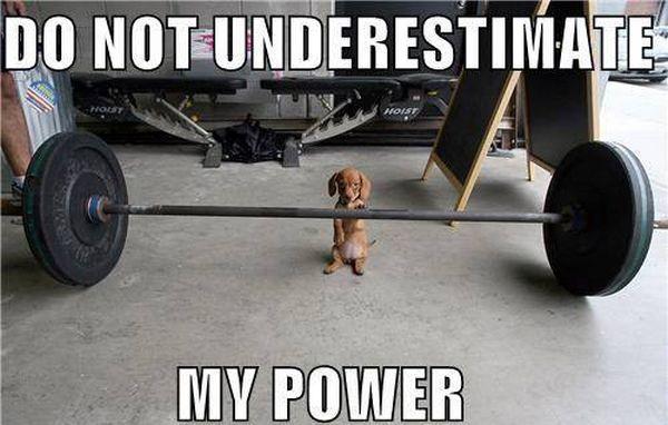 Puppy Power - Dog humor