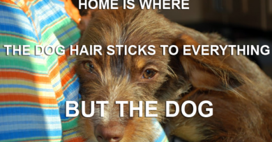 The Home Is Where The Dog Hair Sticks To Everything But The Dog - Dog Humor