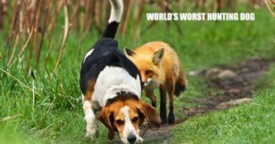 World's Worst Hunting Dog - Dog humor