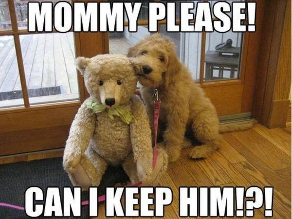Mommy Please - Dog humor