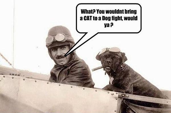 Dogfight - Dog humor