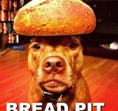 Bread Pit - Dog humor