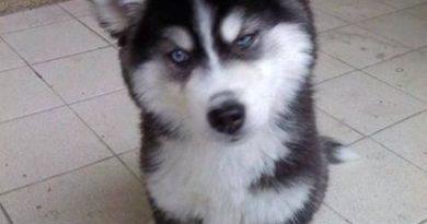 Are You Kidding Me? - Dog Humor