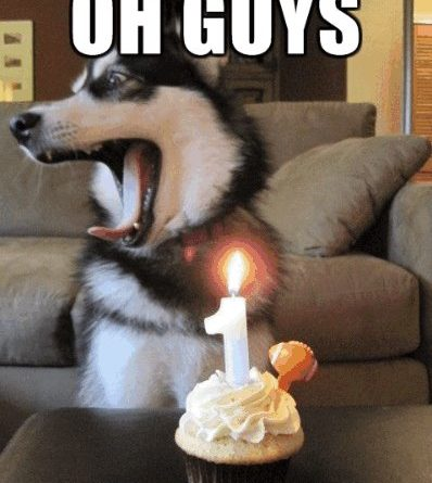 Birthday Surprise - Dog humor