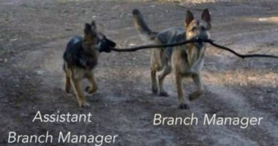 Branch Manager And His Assistant - Dog humor