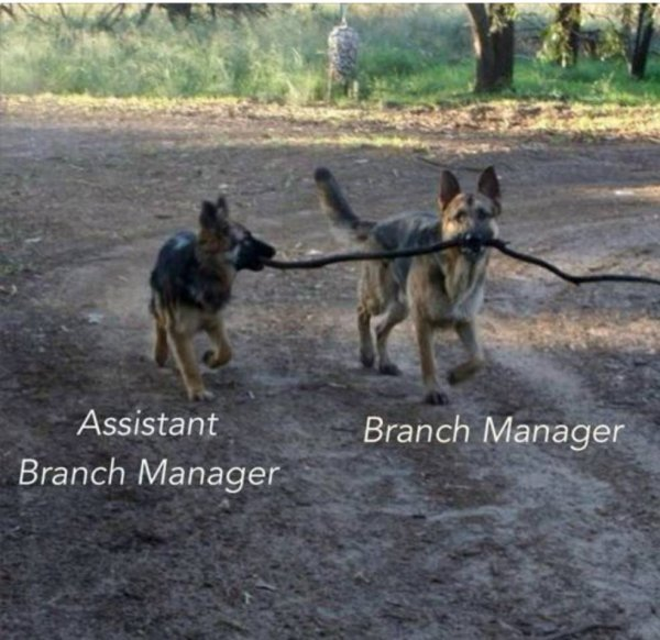 dog-humor-funny-branch-manager-assistant