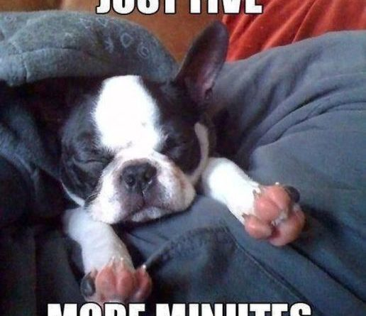 Just Five More Minutes - Dog humor