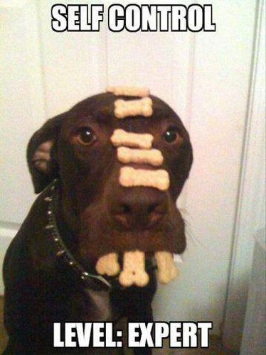 Self-Control - Dog humor
