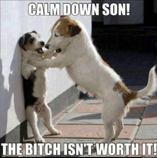 Calm Down Son - Dog humor