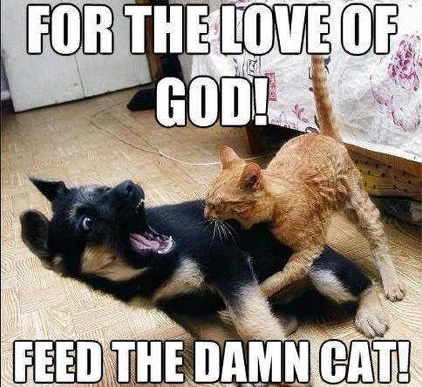 Feed The Damn Cat - Dog humor