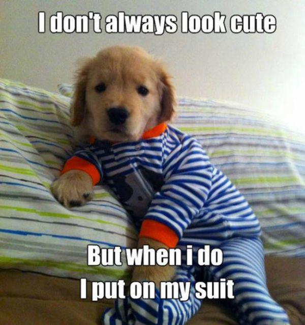 I Don't Always Look Cute - Dog humor