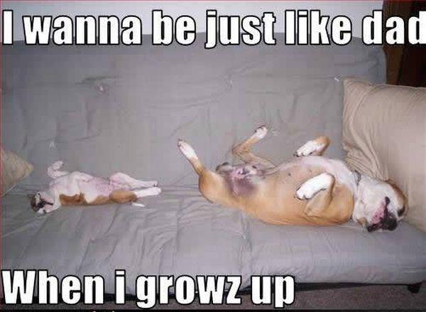 Like Father Like Son - Dog humor
