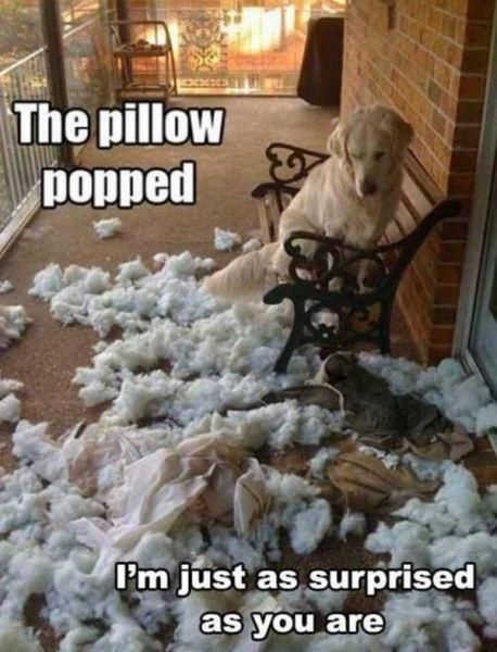 Popping Pillow - Dog humor