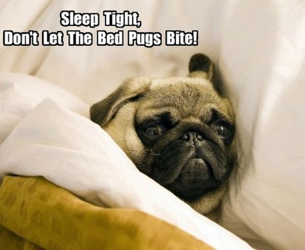 Sleep Tight - Dog humor