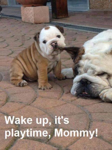 Wake Up! - Dog humor