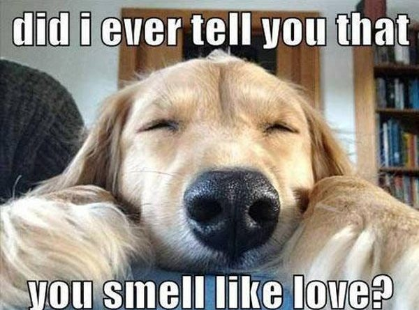 Smell Of Love - Dog humor