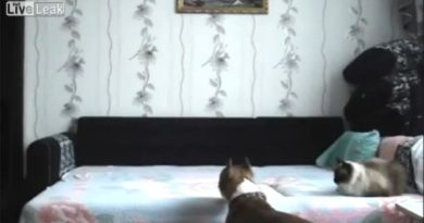 Dog Not Allowed On The Bed - Dog humor