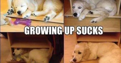 Growing Up Sucks - Dog humor