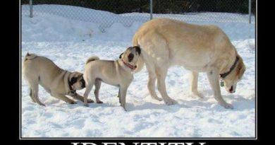 Identity - Dog humor