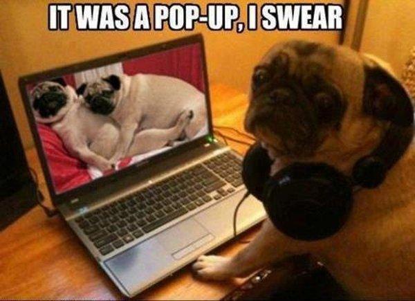 It Was Pop Up, I Swear - Dog humor