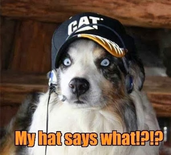 My Hat Says What?!?! - Dog humor