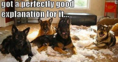Perfectly Good Explanation - Dog humor