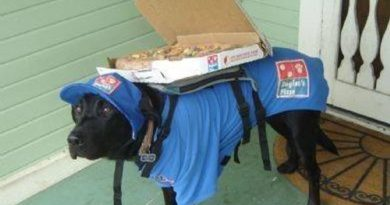 Arrives Hot Or Your Pizza Is Free - Dog humor