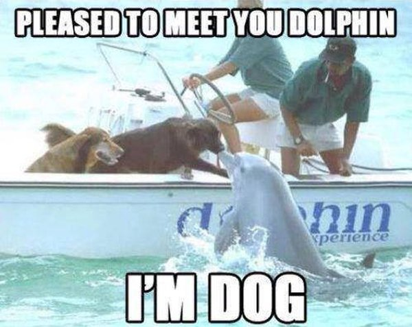 Pleased To Meet You Dolphin - Dog humor