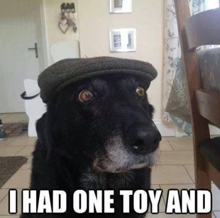 When I Was A Pup I Had One Toy And It Was A Stick - Dog humor