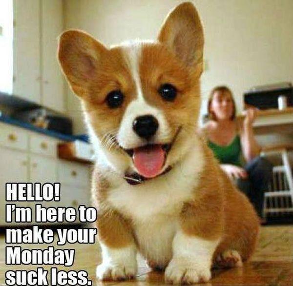 Rescue Puppy - Dog humor
